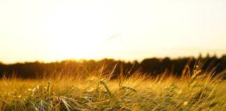 Fabbrica Intelligente, Agrifood, Scienze della Vita