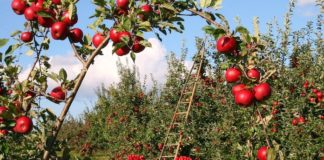 bando Horizon 2020 per l'agricoltura