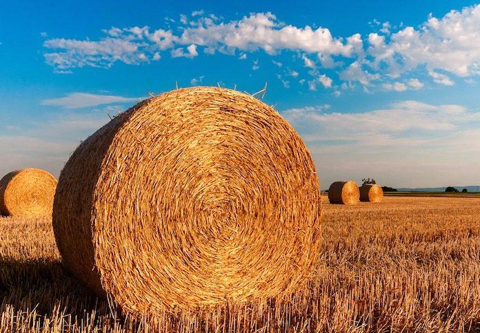 Mutui agevolati per acquistare azienda agricola